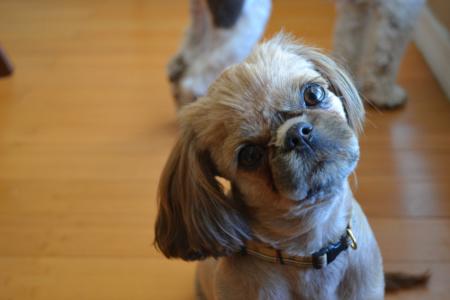 почему собаки наклоняют голову когда слушают